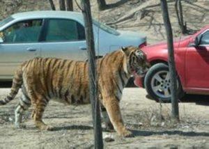 tiger_on.cc