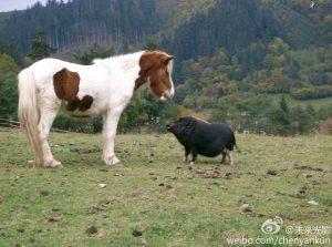 野猪和马 因小失大