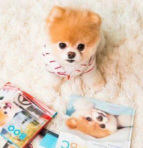 愛看卡通片的狗狗