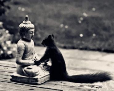 將心比心 善待眾生