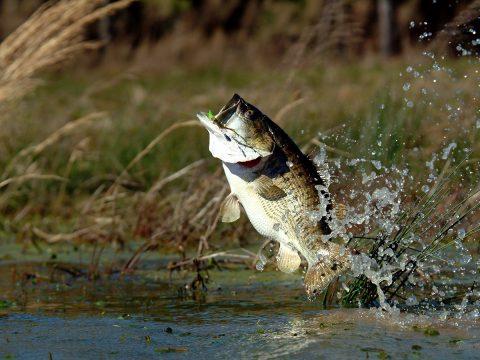 釣魚為樂_抑或是釣魚為禍