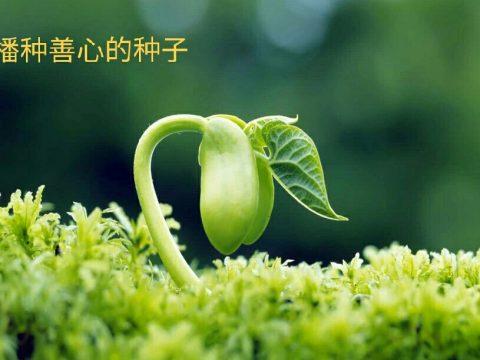 種下一顆善心的種子