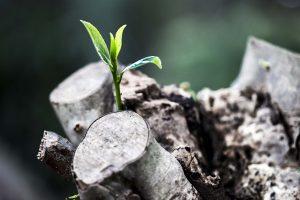 佛教與人生 - 無根樹
