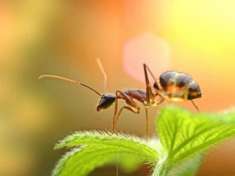 佛教與人生 - 善待眾生: 螞蟻三部曲