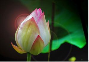 佛教與人生 - 胸姐的燦爛人生