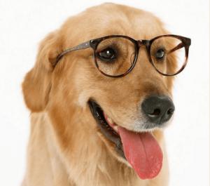 佛教與人生 - 聰明的大狗