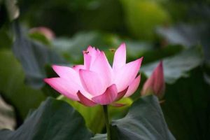 福慧佛系 - 法音中的世間法