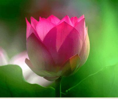 福慧佛系 - 你若真的愛牠,那請把你的愛藏在心裡